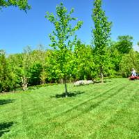 local-lawn-maintenance-contractors-in-Harvey-IL