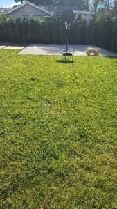the-yard-cutting-businesses-in-Camarillo-CA
