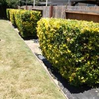 local-lawn-cutting-services-in-Lynwood-CA