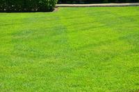 local-lawn-and-landscape-maintenance-services-near-me-in-Aliso Viejo-California