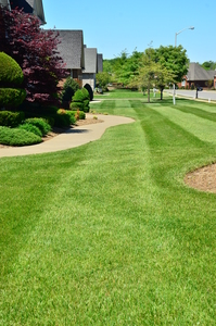 affordable-grass-cutting-businesses-in-Burbank-CA