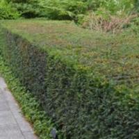 grass-cutting-businesses-in-Covina-CA