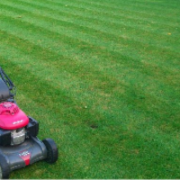 local-lawn-cutting-services-in-Charleston-SC