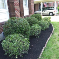 local-lawn-and-landscape-maintenance-services-near-me-in-Jackson-Tennessee