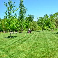 affordable-lawn-services-in-Springfield-PA