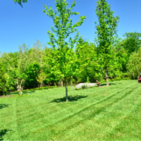 lawn-care-services-in-Kent-WA