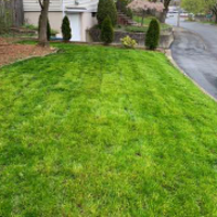 the-yard-cutting-businesses-in-Malden-MA