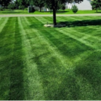 affordable-grass-cutting-businesses-in-Bloomington-MN