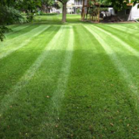 affordable-grass-cutting-businesses-in-Brooklyn Park-MN