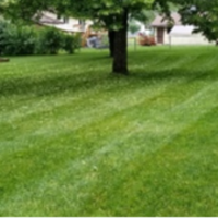 affordable-grass-cutting-businesses-in-Roseville-MN