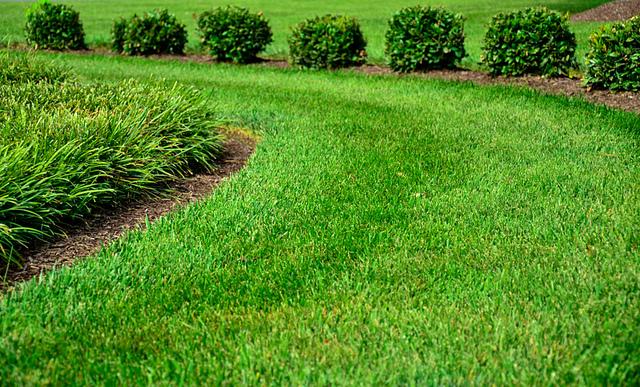 GreenPal Lawn Tips