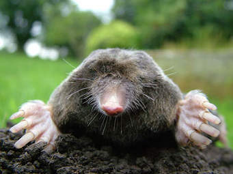 The 8 Best Home Remedies To Get Rid Of Moles And Gophers