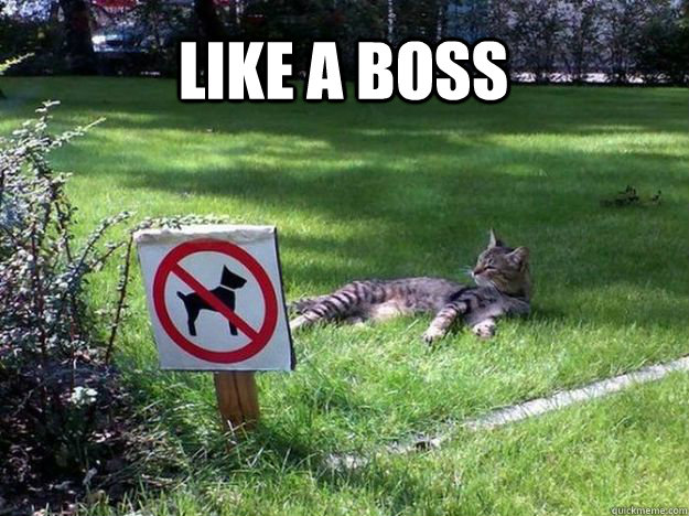 Lawn Mowing Meme  Subcategory: Cat Meme  We have actually used this meme before in why cats eat grass. But it is perfect for it's simplicity, and relaxing nature. Maybe the dating pic was inspired by this cat?
