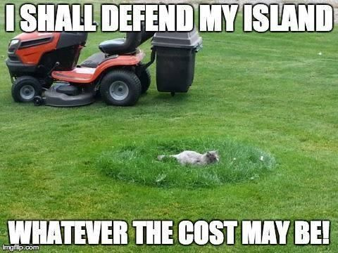 Lawn Mowing Meme  Subcategory: Internet Cat Meme  Most cats would run in fear from a lawn mower, but this cat stuck it out, and remained still no matter the cost! For that we salute this cat with the first 9 star rating in this collection of lawn mowing meme.