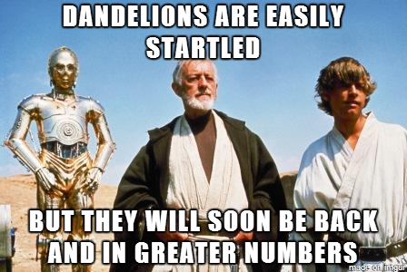 Lawn Care Meme  Subcategory: Dandelion Meme  I always appreciate any lawn care advice, but this is one of the only tips that Obi Wan Kenobi is ever quoted with. So this meme is highly cherished among the lawn care community.