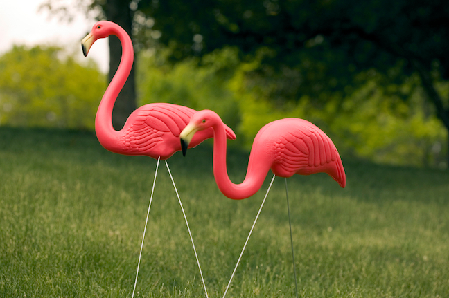 HOA Regulation fined homeowner for lawn flamingos