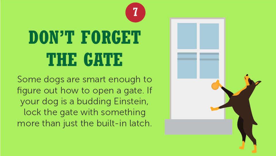 get a dog-proof gate