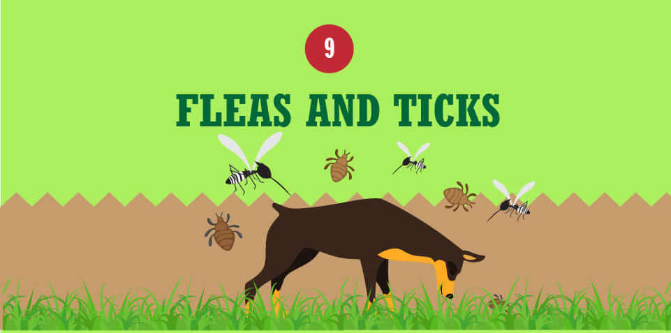 control fleas and ticks in the lawn