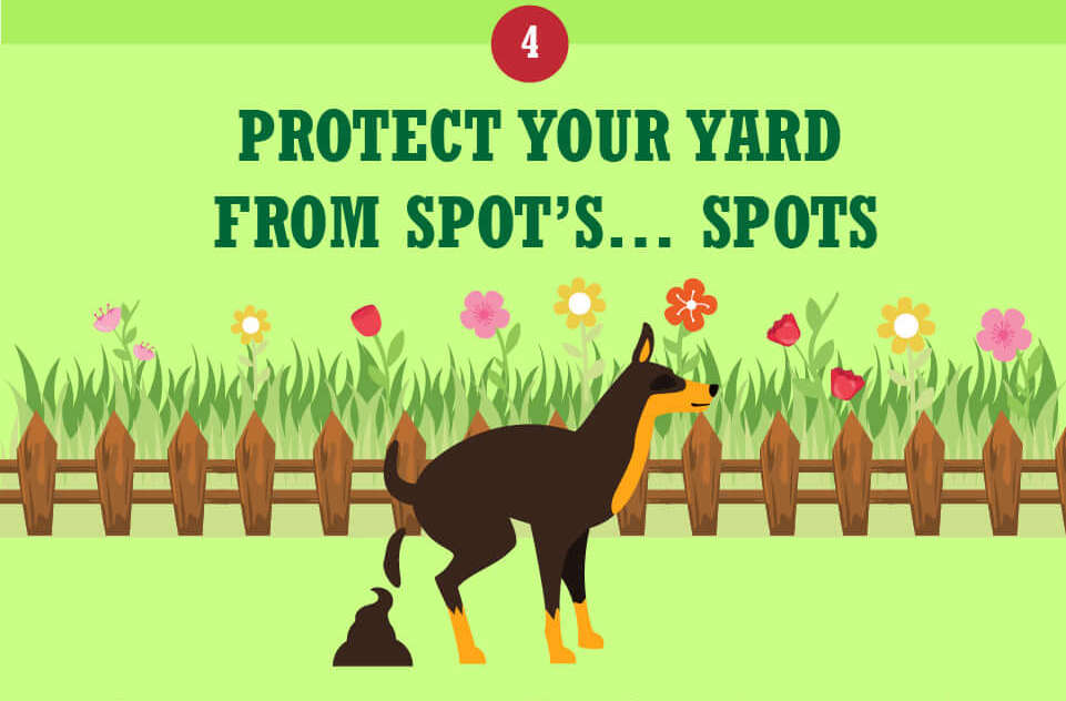 prevent brown patches of grass