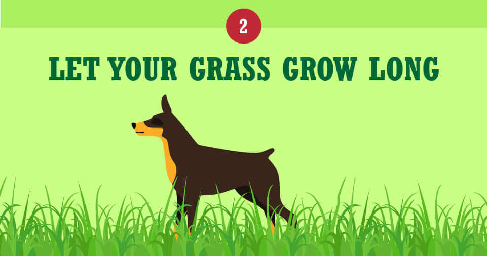 Let your grass grow tall