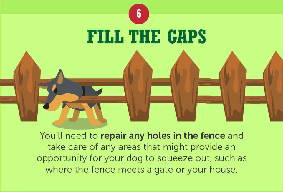 repair the fence so your dog cant escape