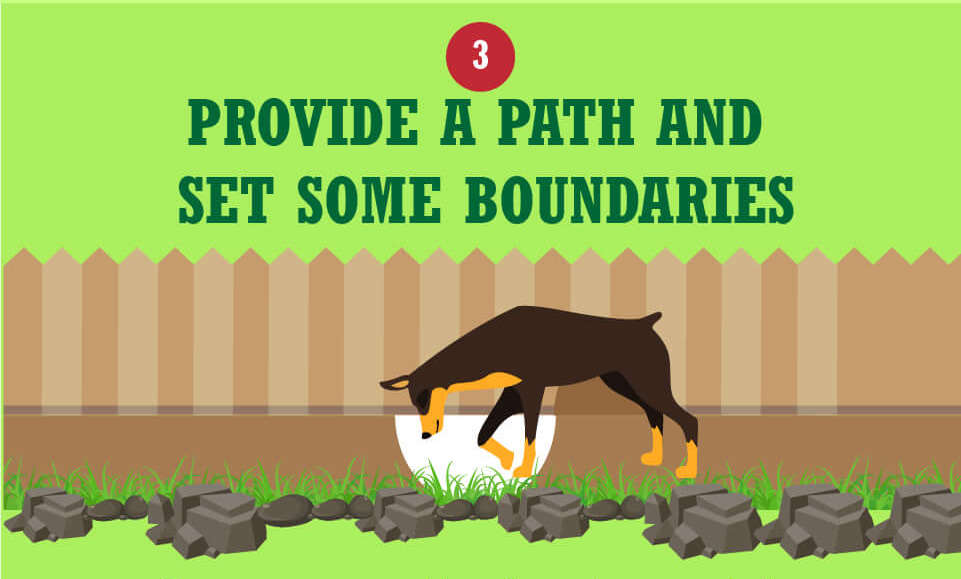 Make a path for your dog