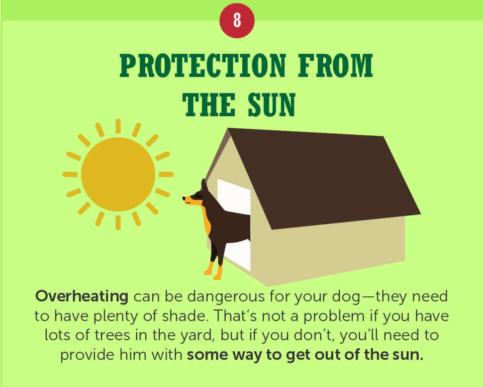 Provide protection from the sun for your dog