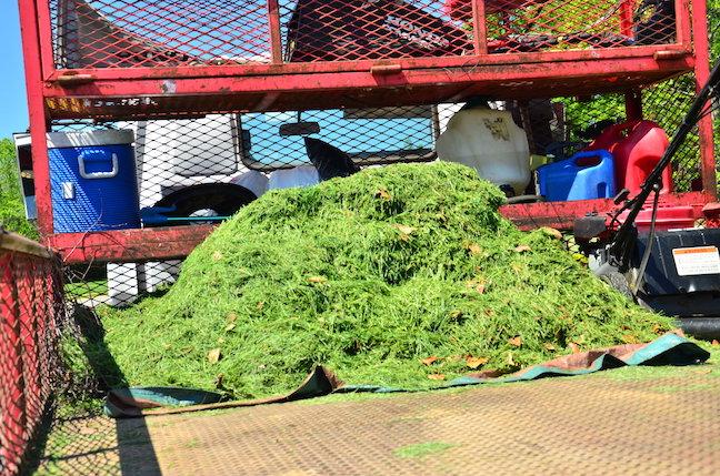Greenpal lawn clippings