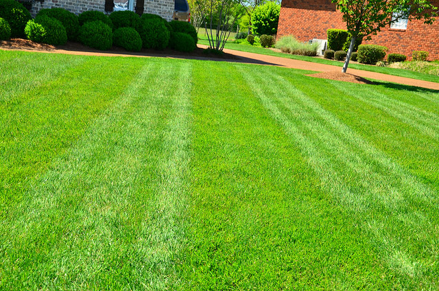 Perfectly mowed grass