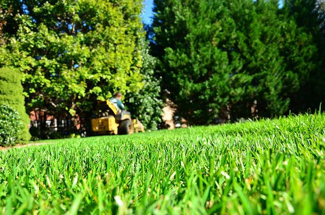 Greenpal green lawn atlanta
