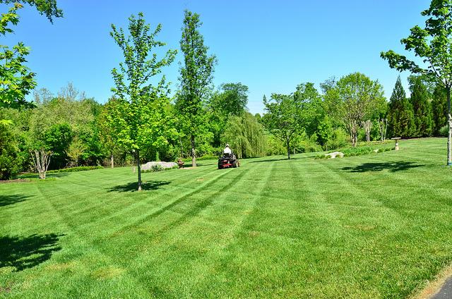 Green lawns in atlanta