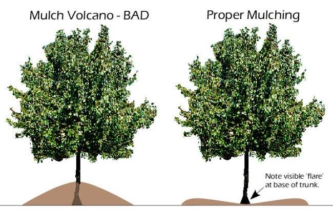 Greenpal lawn care mulch the right way