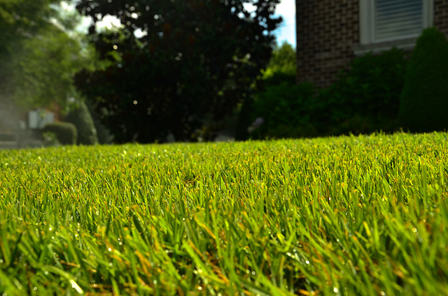 Perfect level lawn