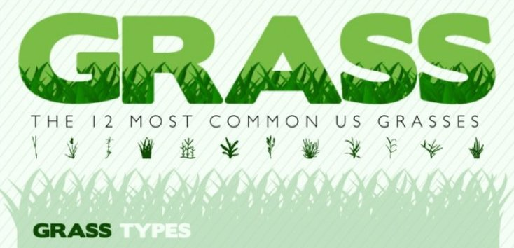 Rsz the 12 most common us grasses 50290b0e87271 w1500