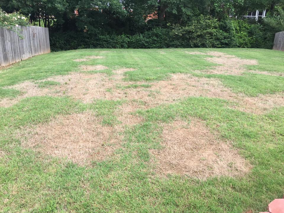 How To Treat Brown Patches In Your St Augustine Grass