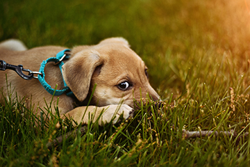 Dog Waste Removal Zionsville In