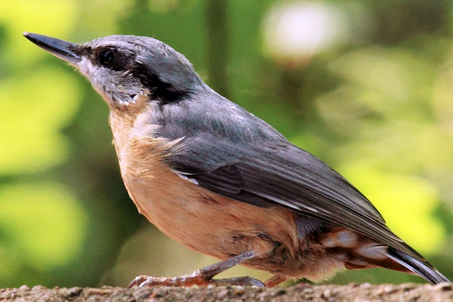 Birds Are Wonderful, And Getting Them To Your Yard Can Be Very Easy. When  You Have Birds Singing Their Songs Around You, You Canu0027t Help But Feel  Great In ...