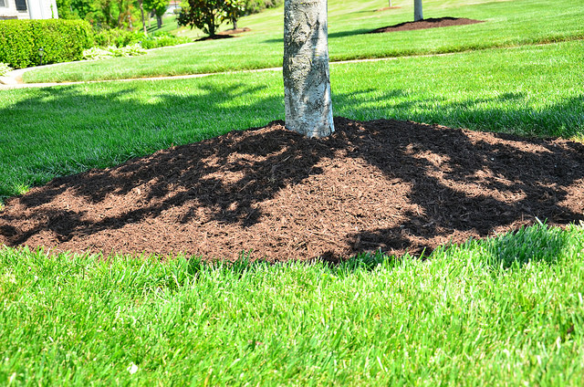 How Thick Should I Mulch My Beds