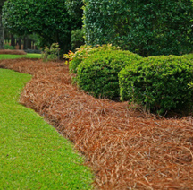 Should you put down mulch or pine straw in your landscaping beds?
