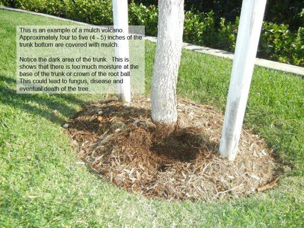 Landscaping Guidance for Trees and Lawns in Atlanta Georgia