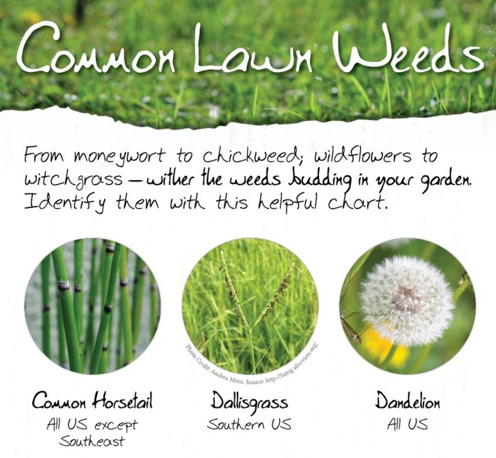 GreenPal Lawn Care weeds resource