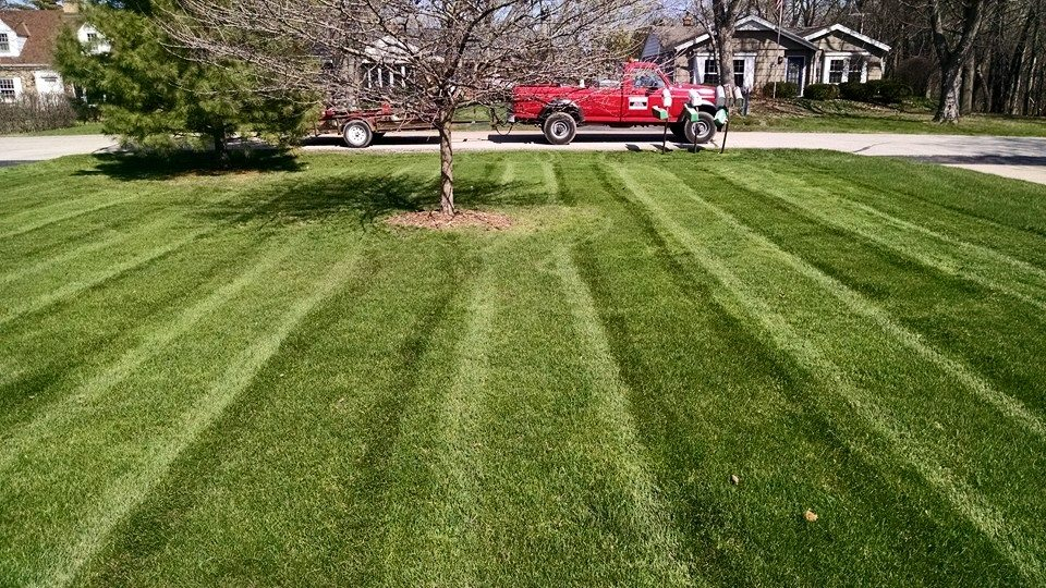 Organic Lawn Care St Petersburg Florida