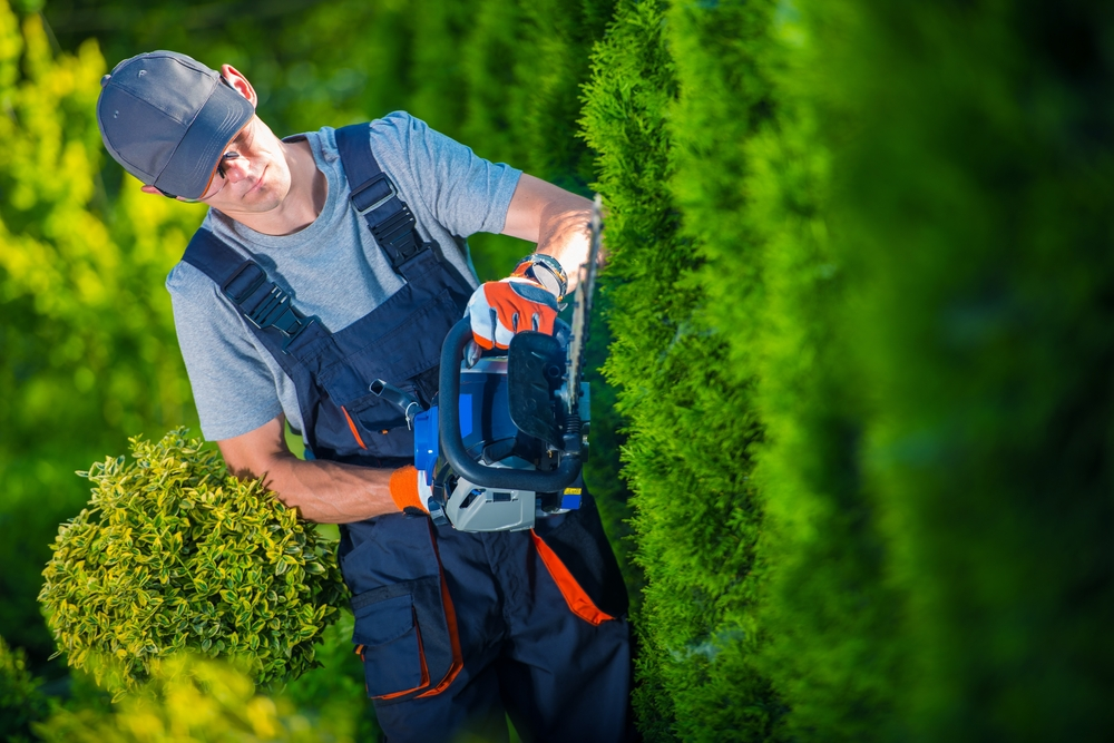 Cordless hedge trimmers grant you the unplugged freedom to cut anywhere. They're extremely quiet, very powerful and can run for a surprisingly long time before the battery must be recharged.