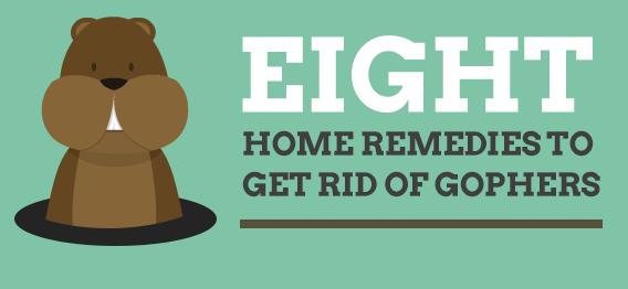 Get rid of moles 1