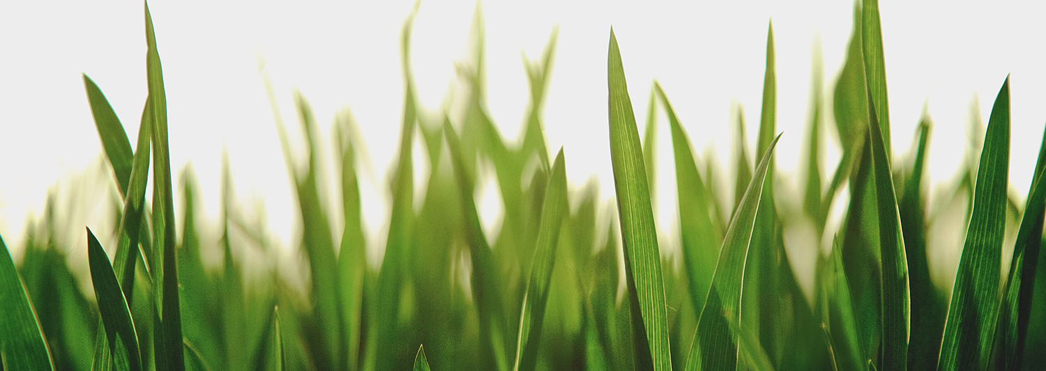 Want a great looking lawn ? Here are the best lawn mowing