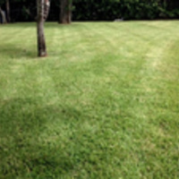 Local Lawn care service near me in Alva, FL, 33920