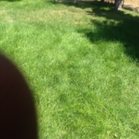 affordable-landscaping-maintenance-services-in-Englewood-CO