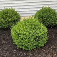 affordable-lawn-services-in-Buffalo-NY