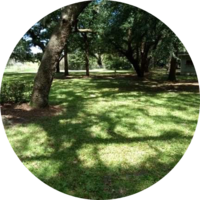 cheap-lawn-cutting-businesses-in-Ocala-FL