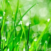 local-lawn-and-landscape-maintenance-services-near-me-in-Pflugerville-TX